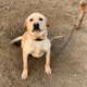 Dog For Sale In Rawalpindi