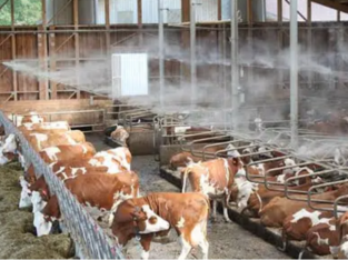 Dairy and poultry farm misting system, hydroponic and lawn misting